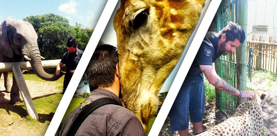 Elefante, girafa e chita: um dia de interações animais!
