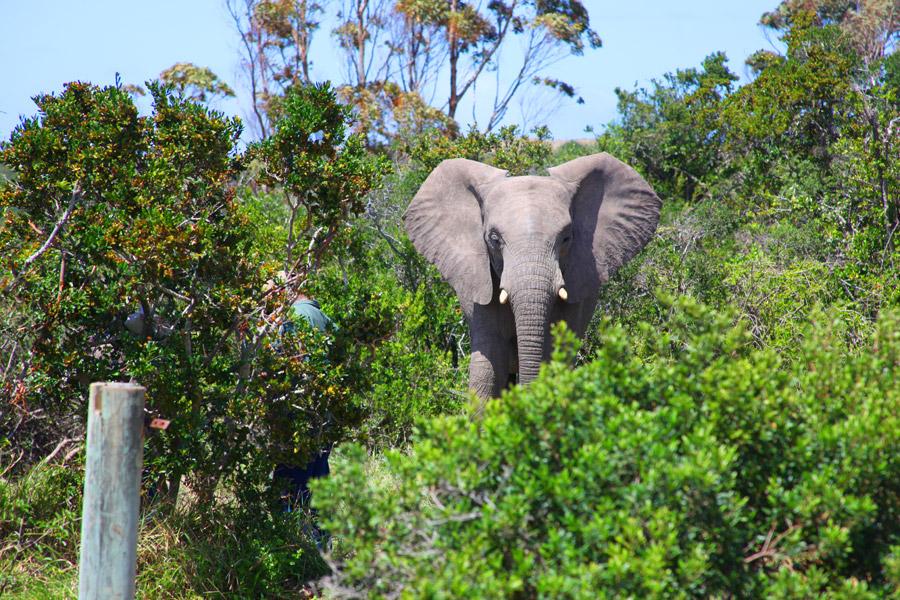 Alimentando elefantes!