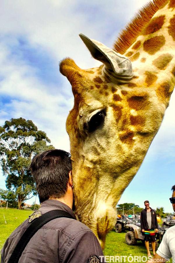 Interação com girafa!
