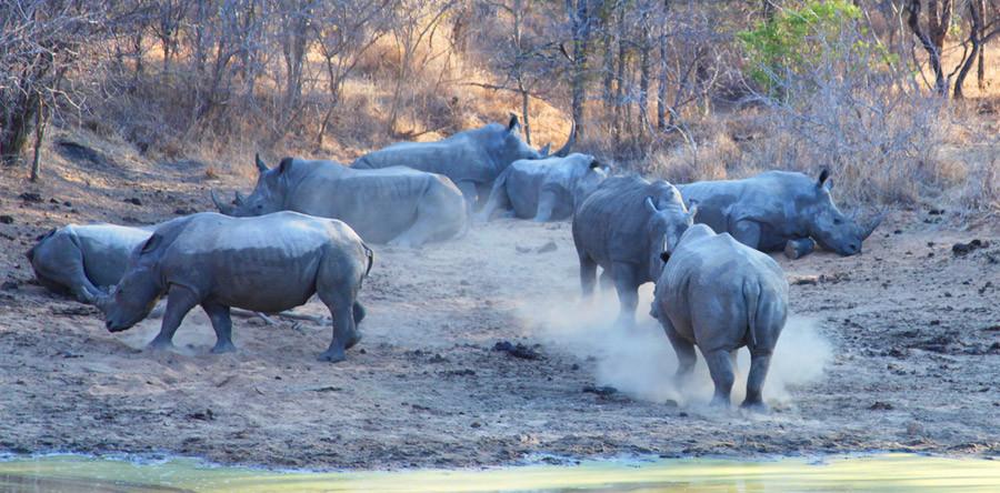 De carro ou a pé, como são os safáris na África do Sul