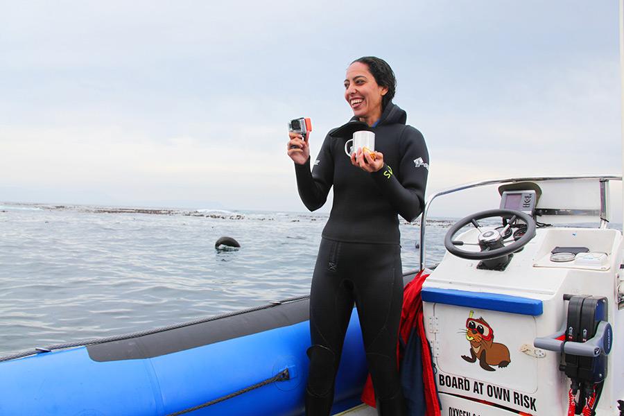 As focas de Hout Bay